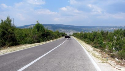 Be aware of cows in the road when driving in Bosnia