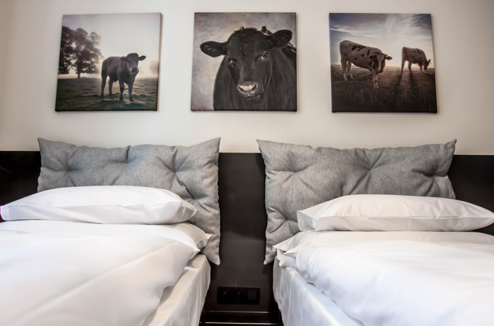 """prague flats for rent"" Cow Decorated Two Bedroom MOOo Apartment in central Prague Czech Republic"
